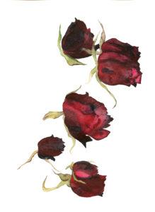 rose-oct_18